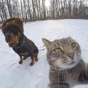Manny, the Selfie-Lover Cat of Instagram