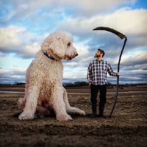 Instagram in Love with a Giant Dog